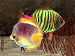 Meerwasser-Aquarium 3D