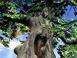 Eichenbaum 3D