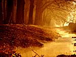 Wald-Welten